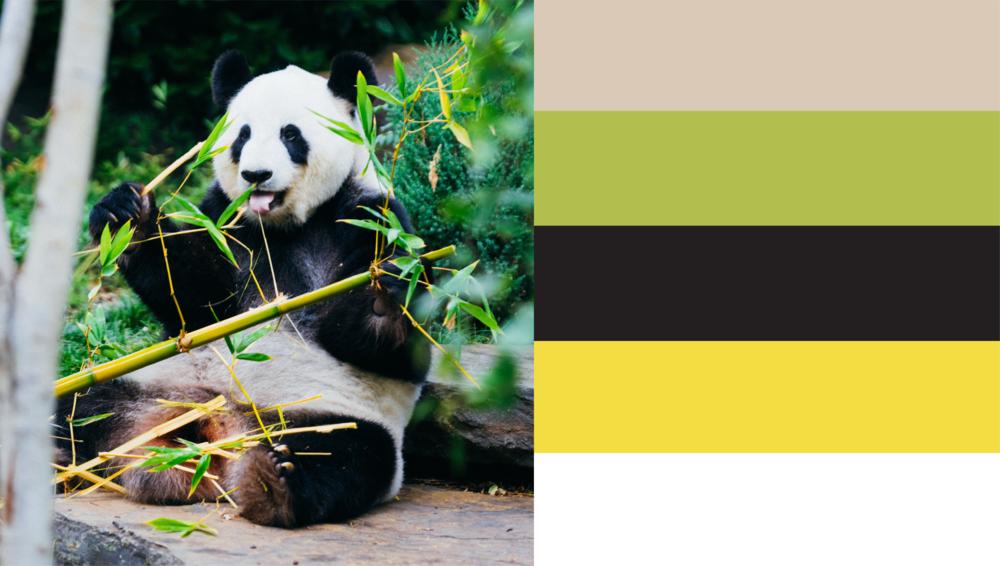 bamboo files-03.png