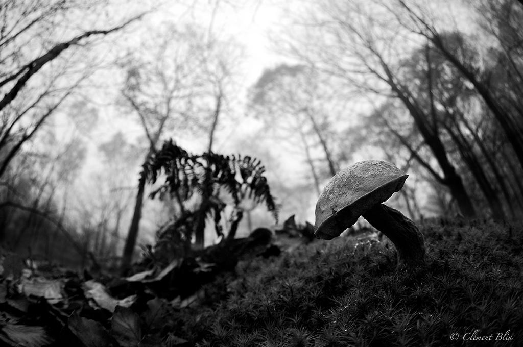 Bolet au milieu des bois