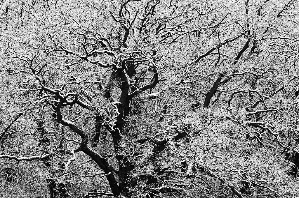 Arbre et neige