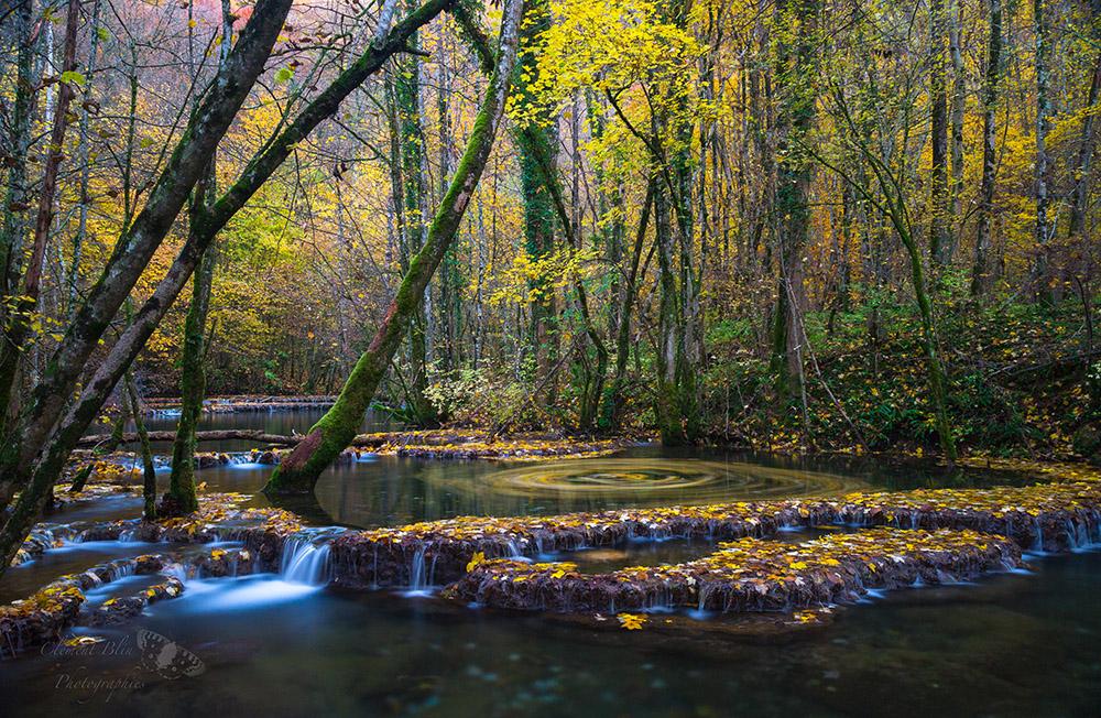 Tourbillon de feuilles sur la Cuisance, Arbois, Cascade des Planches, Jura