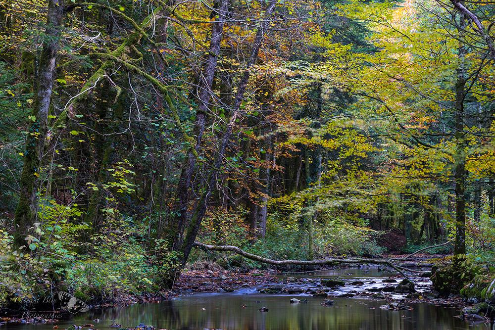 Couleurs d'automne sur le Hérisson, Jura