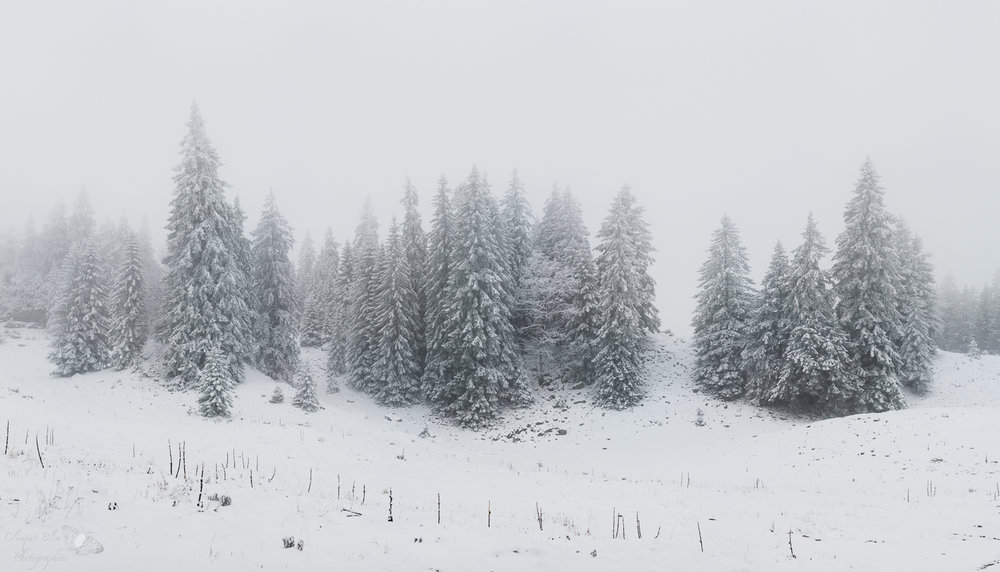 Forêt enneigée sur le versant ouest de la Dôle, à quelques minutes de la frontière française