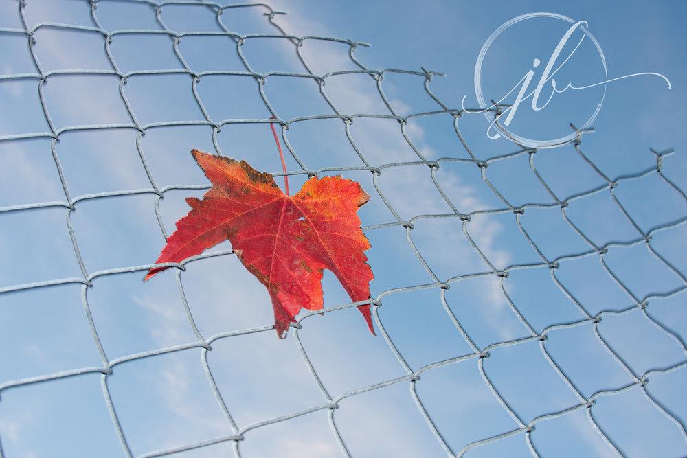 Strobed Leaf-Shreveport Photographer
