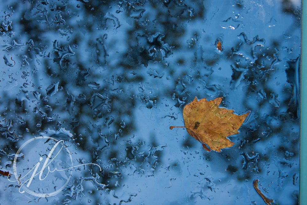 Rainy Leaves-Bossier Photographer