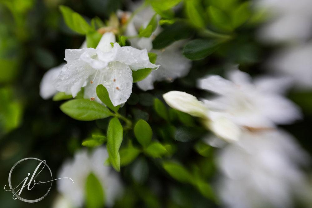 East Tx flowers