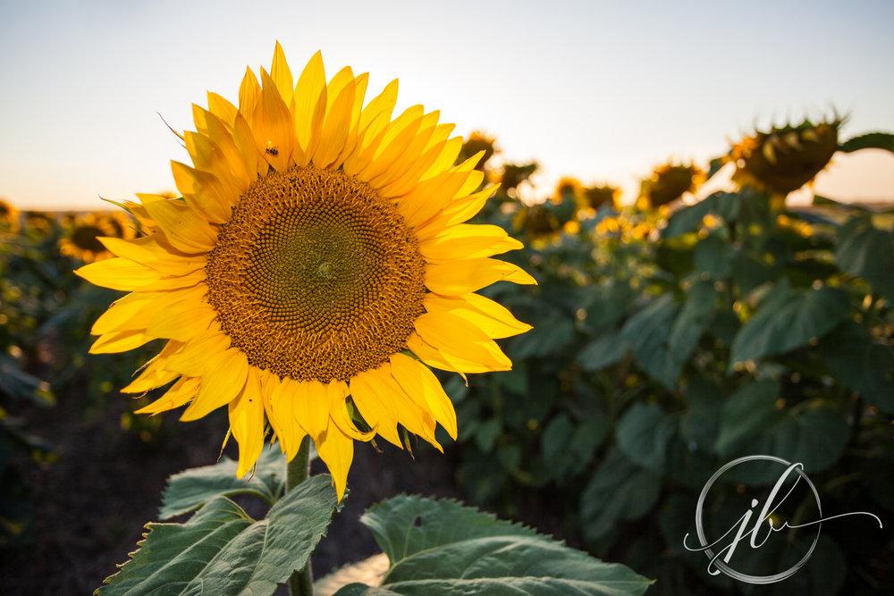 Shreveport Flower Photography