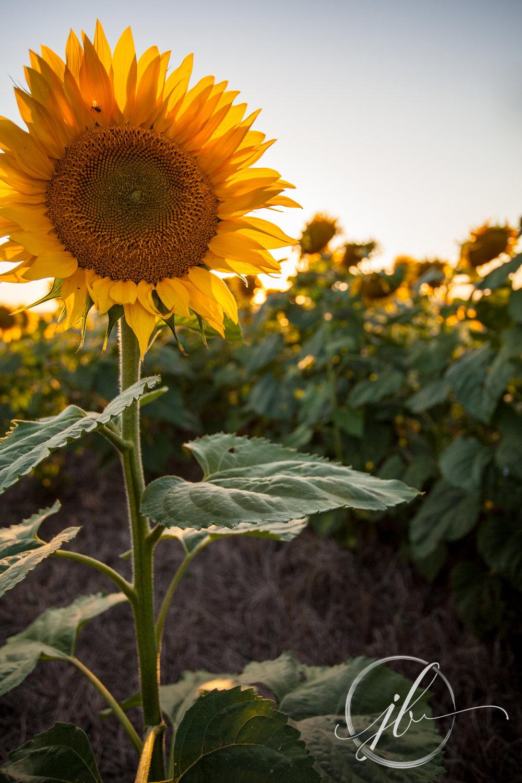 Bossier Flower Photography