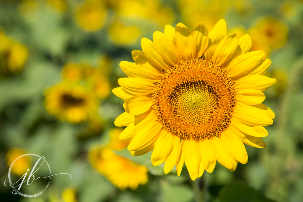 Commercial Flower Photography