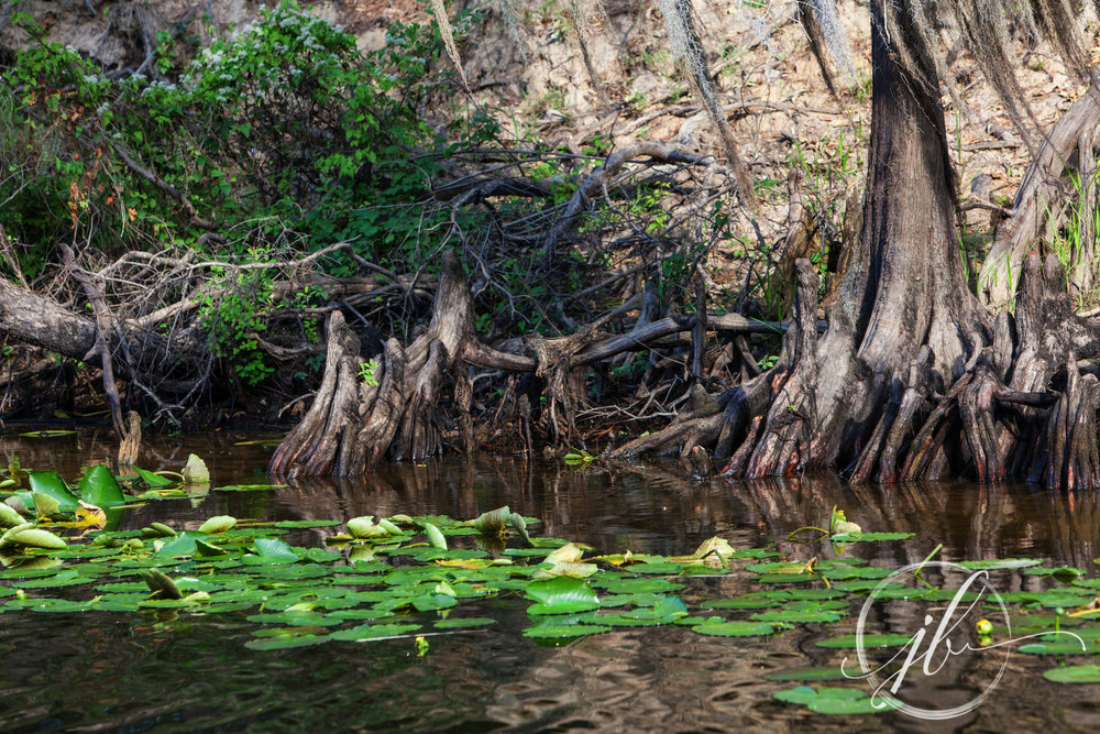 Caddo Lake Photo