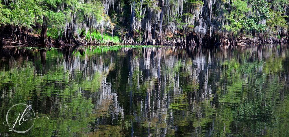 Caddo Lake Photography
