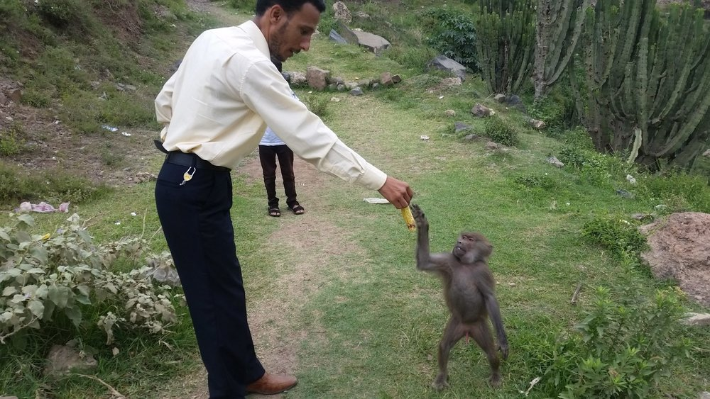 Ibb zoo monkey with Omar distributing the fruit Kim's Rescue got for all the monkeys and baboons.jpg