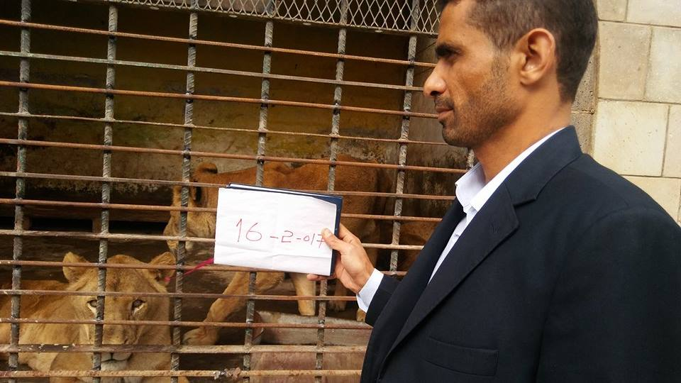 Feb 16th 2017 Kim Michelle's Lawyer Taiz Zoo Yemen.jpg