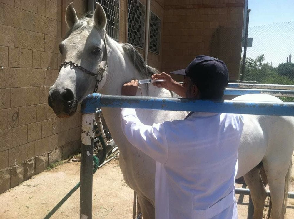 Arabian AL AYLAN 12 october 2017 muscle strain anti inflammatory OWAP AR The Police Academy  Sana'a Yemen.jpg