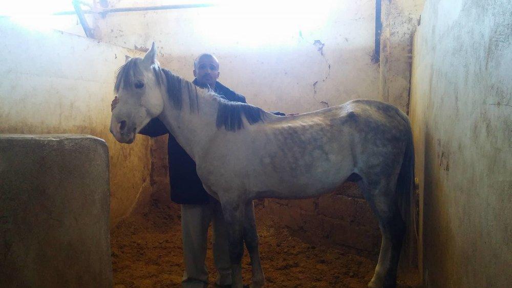 dhamar muaad ameen saif OBAID 21 dec 2017 OWAP AR visit horse rescue.jpg