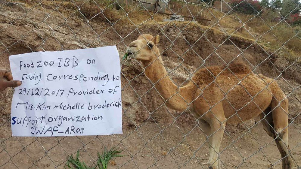 Ibb Zoo 29 DEC 2017 food delivery to all animals and darling camel Salman pics OWAP AR.jpg