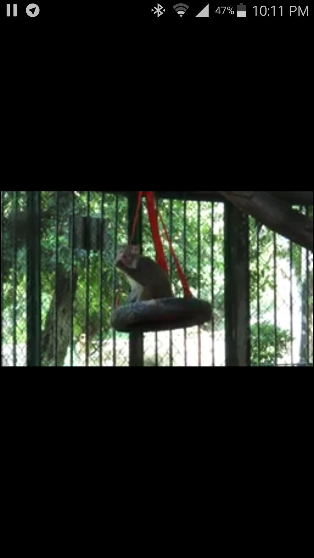ibb zoo OWAPAR  Baboon swinging seats project 14 APRIL 2018 haitham.png