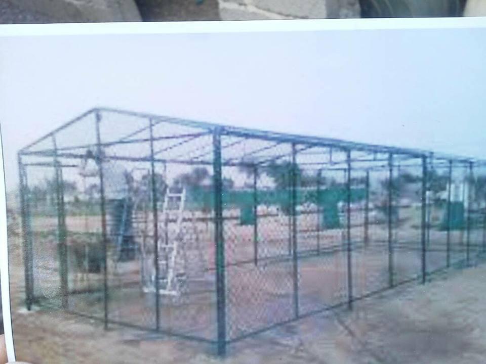 ibb zoo caracal release to new enclosure building project OWAP AR Haitham coywrite.jpg