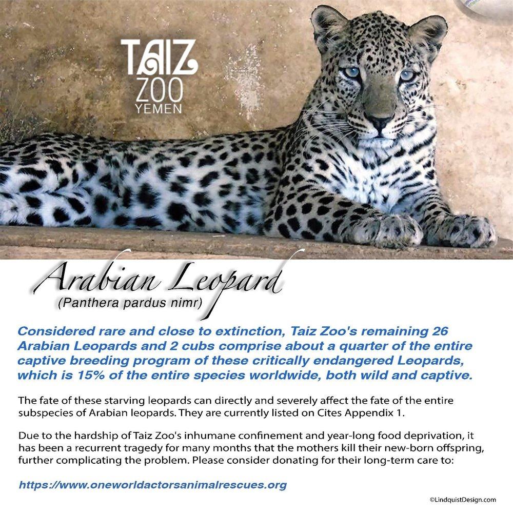 Arabian Leopard correct spelling Taiz Zoo flyer OWAp-AR with website.jpg