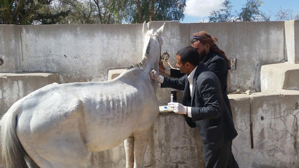 Dhamar vet visit Maged A Al-garadi   10 jan 2018 OWAP AR .jpg