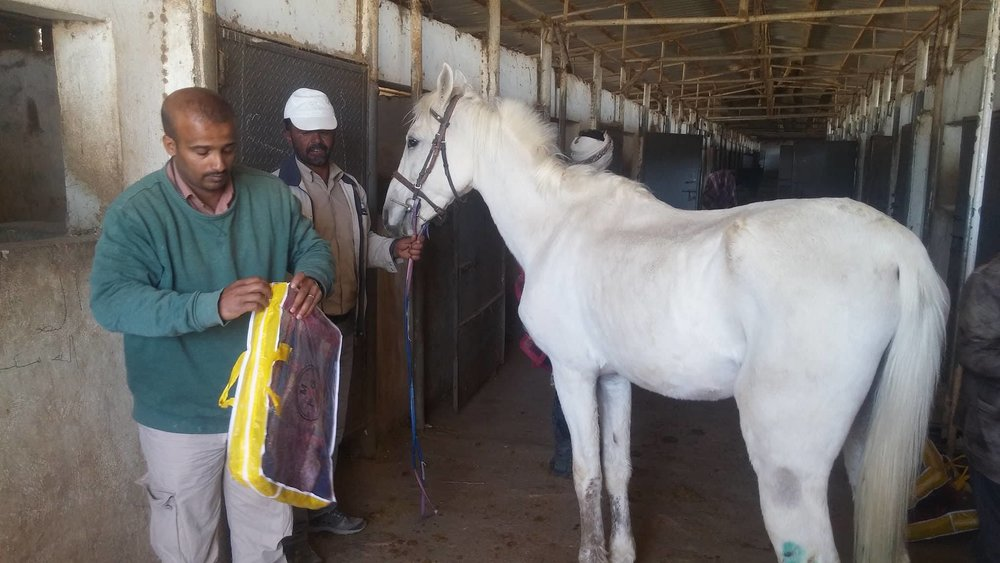 dhamar horse blankets delivery OWAP AR .jpg