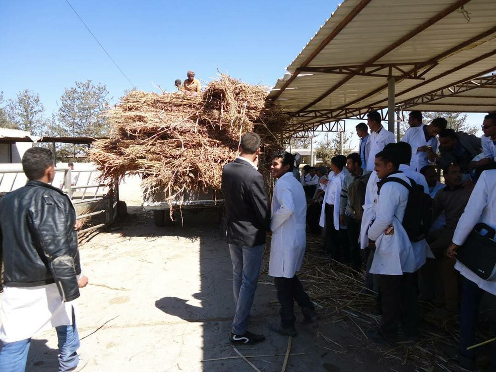 dhamar food delivery offering by Head of Vet Dept Thamar Uni  Rosabah Farm pic Dr Al garadi for OWAPAR 20 jan 2018.jpg