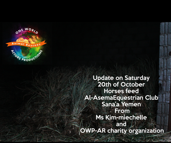 Riding OWAP AR providing 20 oct 2018 Nada pic Rescue Horses Sana'a yemen.png