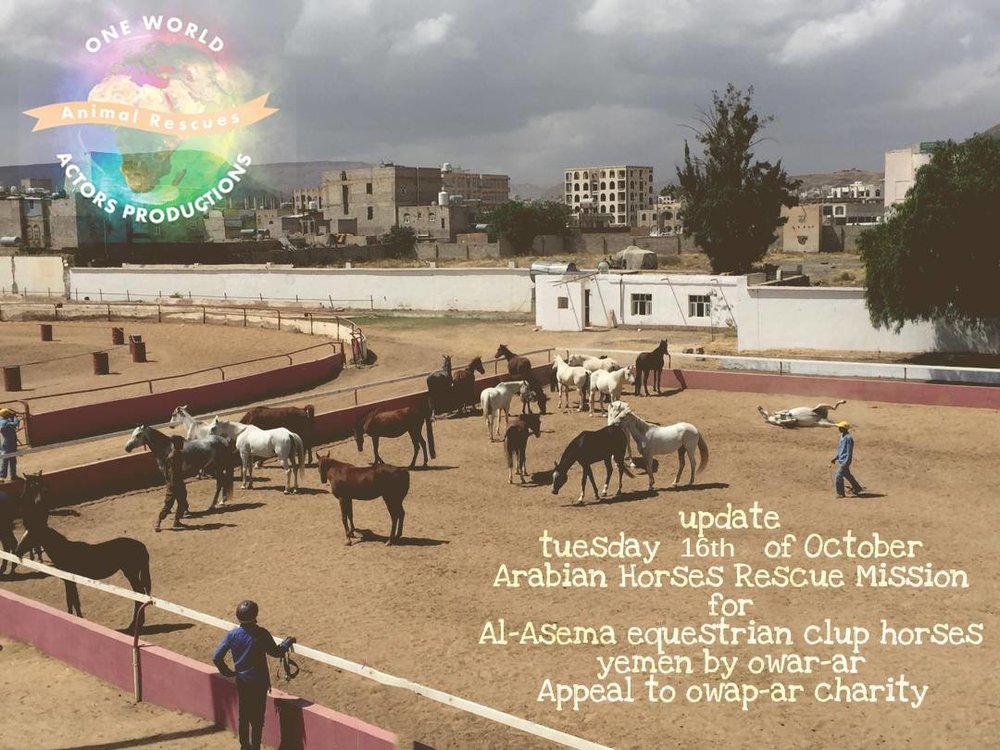riding 16 OCT 2018 OWAP AR by Nada Sana'a horses rescue yemen.jpg