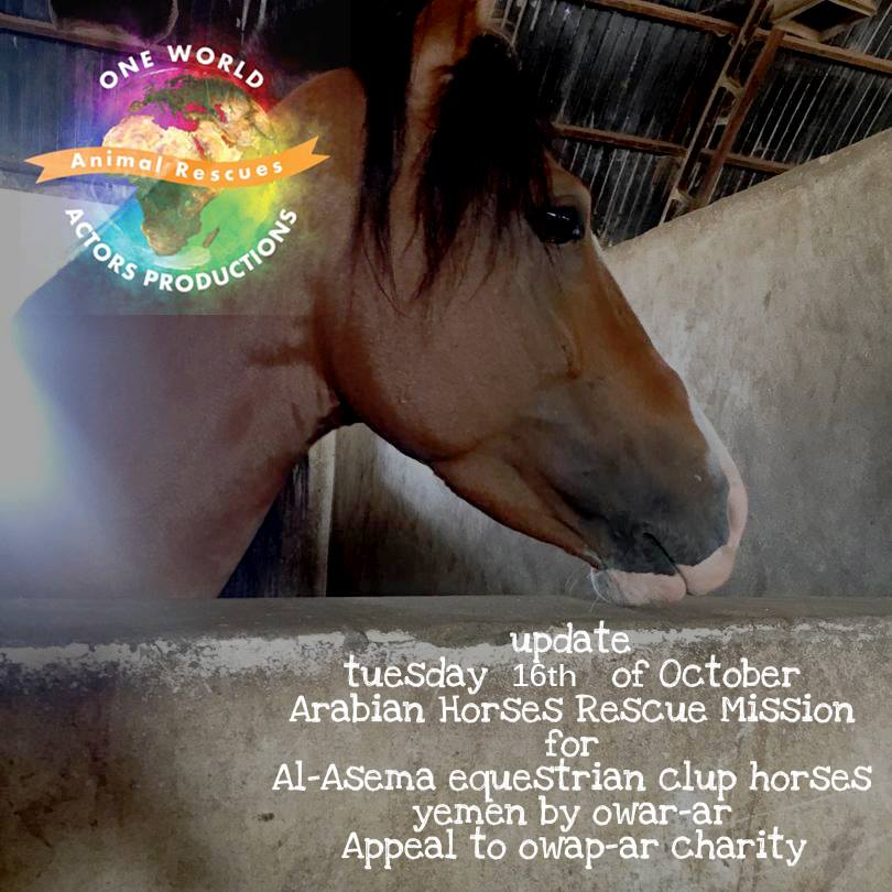 riding 16th October 2018 OWAP AR Riding Club Sana'a by nada horse rescue appeal.jpg