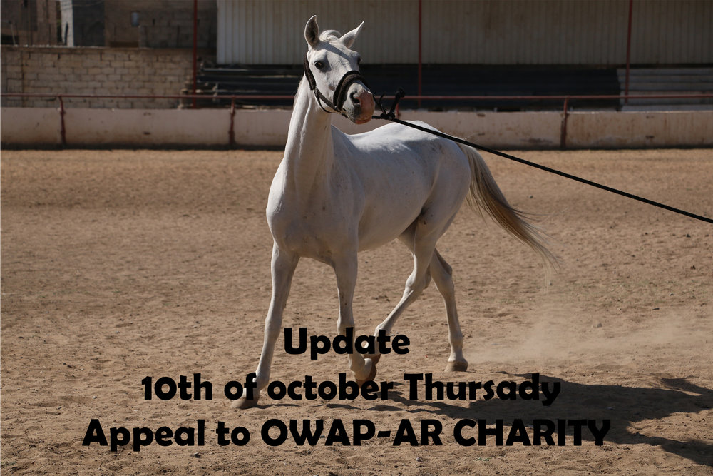 RIDING CLUB WHITE ARABIAN 10 OCT 2018 OWAP AR APPEAL BY NADA YEMEN.jpg