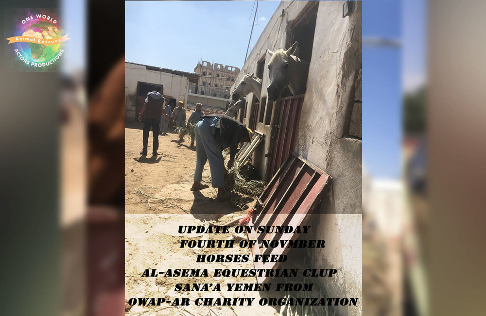 ridin distribution of OWAP AR fodder green persim delivered today by Nadad 4 Nov 2018 sana'a yemen rescue.jpg