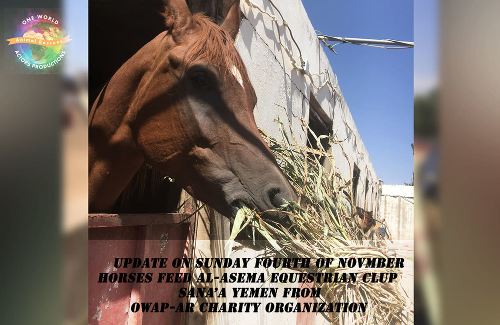 ridin distributin g OWAP AR fodder purchase today 4 NOV 2018 sana'a yemen rescue.jpg