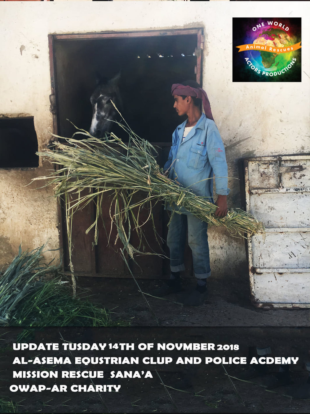 riding club horse eating our delivery of persim sana'a yemen rescue delivery today to club and to police ac 14 nov 2018 by OWAp-AR nada pic correct.jpg
