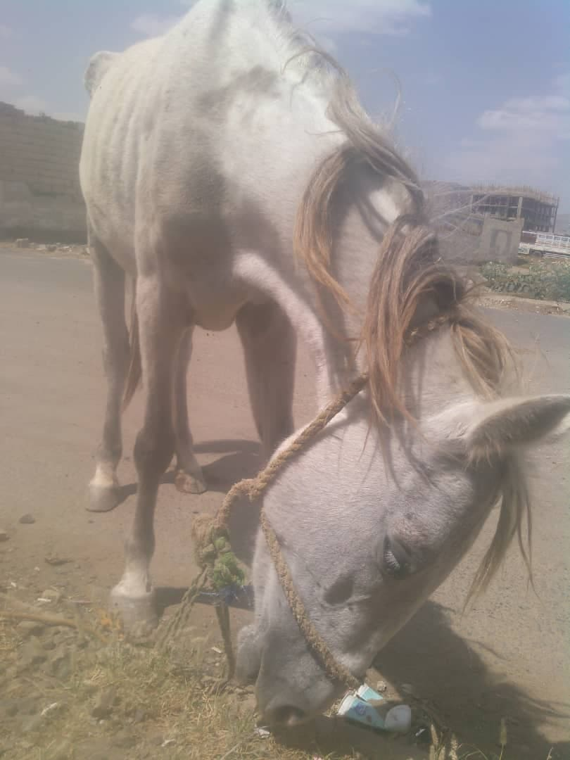 riding cluc sanaa 10 NOV 2018 OWAP-AR yemen rescue nada pic.jpg