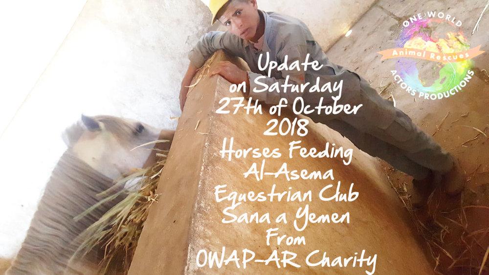 riding club feeding our delivery today 27 OCT 2018 Sana'a yemen by OWAP AR Nada pic  boy 1 of 14 working.jpg