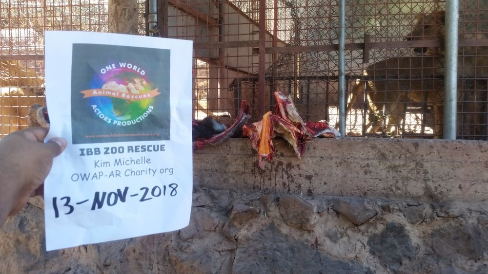 ibb zoo 13 NOV 2018 lions being fed today by OWAP-AR Charity Yemen rescue hisham pic with our sign 13 Nov 2018.jpg