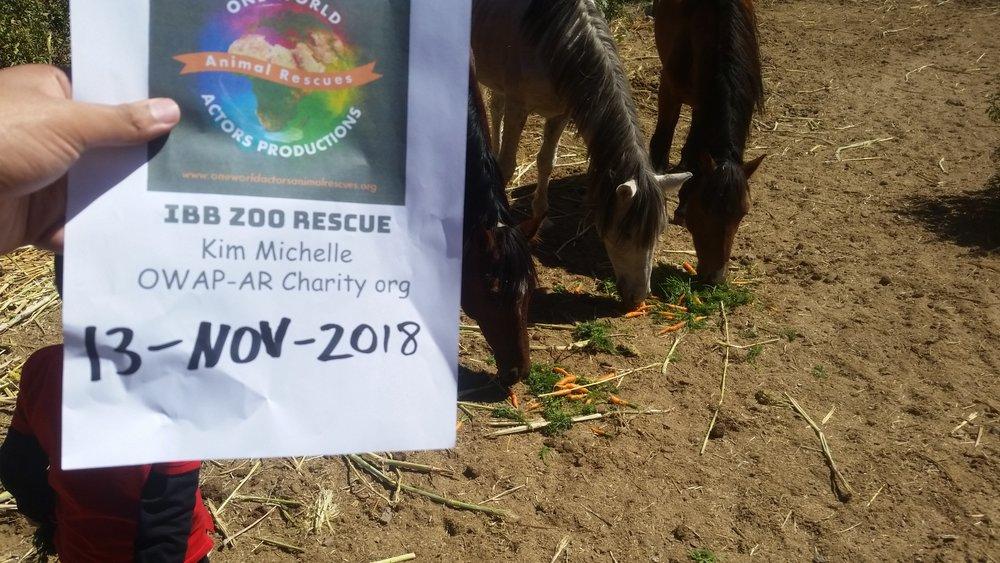ibb zoo carrots for the horses poor mites hisham pic OWAP -AR Charity providing 13 NOV 2018.jpg