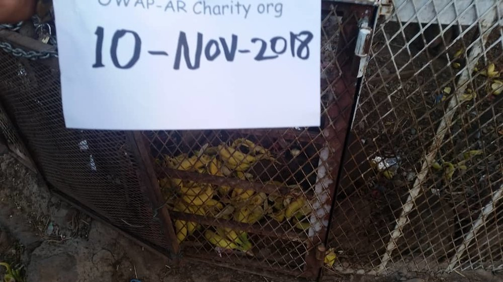 ibb zoo rescue bananas for the hamadryas baboons into cage ...10 NOV 2018 OWAP-AR sign Hisham coordination.jpg