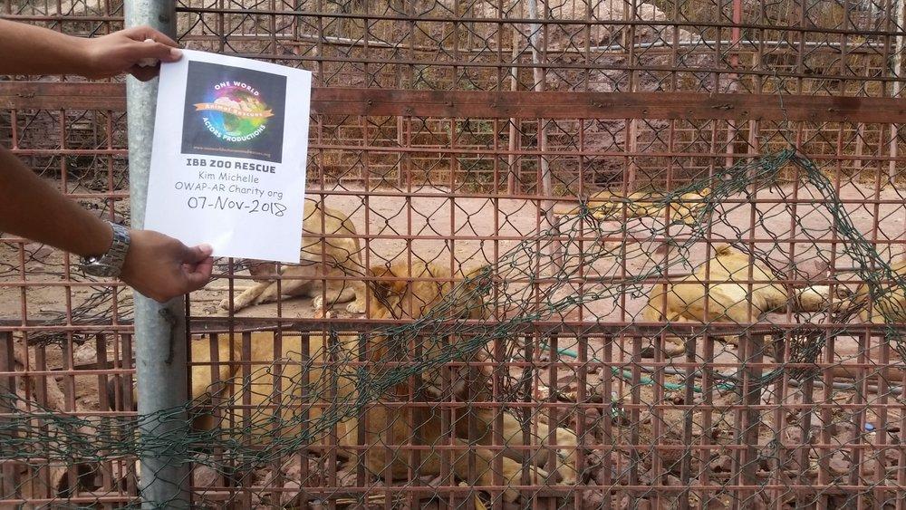 ibb zoo OWAP-AR sign 7 NOV 2018 Hisham's poster LIONS after meal.jpg
