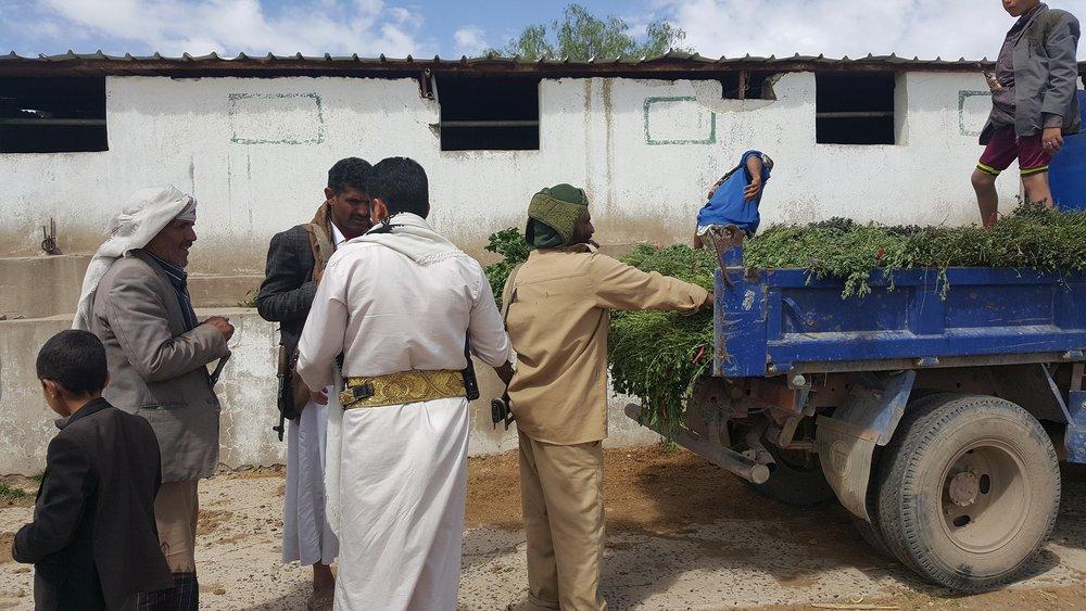 dhamar q'rab arrival delivery fodder horses 16 NOV 2018 OWAP-AR.jpg