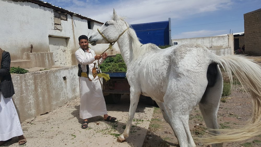 dhamar horse with helall heart breaking OWAP-AR providing fodder today 16 nov 2018.jpg