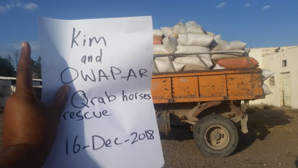 Q'rab 16 DEC 2018 horse rescue dhamar by OWAP-AR with our sign by Hisham Zabedi delivery.jpg