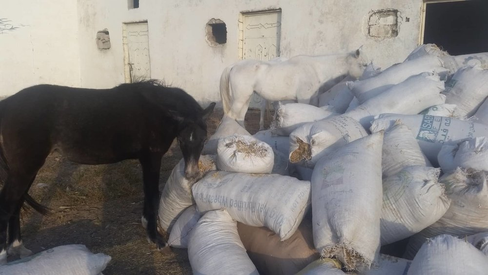 QRAB rescue dhamar 16 hungry horses DEC 2018 by OWAP-AR.jpg