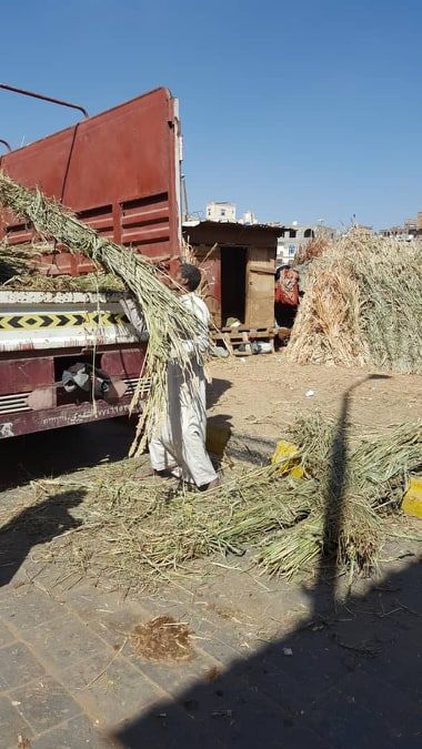riding and military fodder loading 9 DEC 2018 by Nada for OWAP-AR sana'a horse rescue.jpg