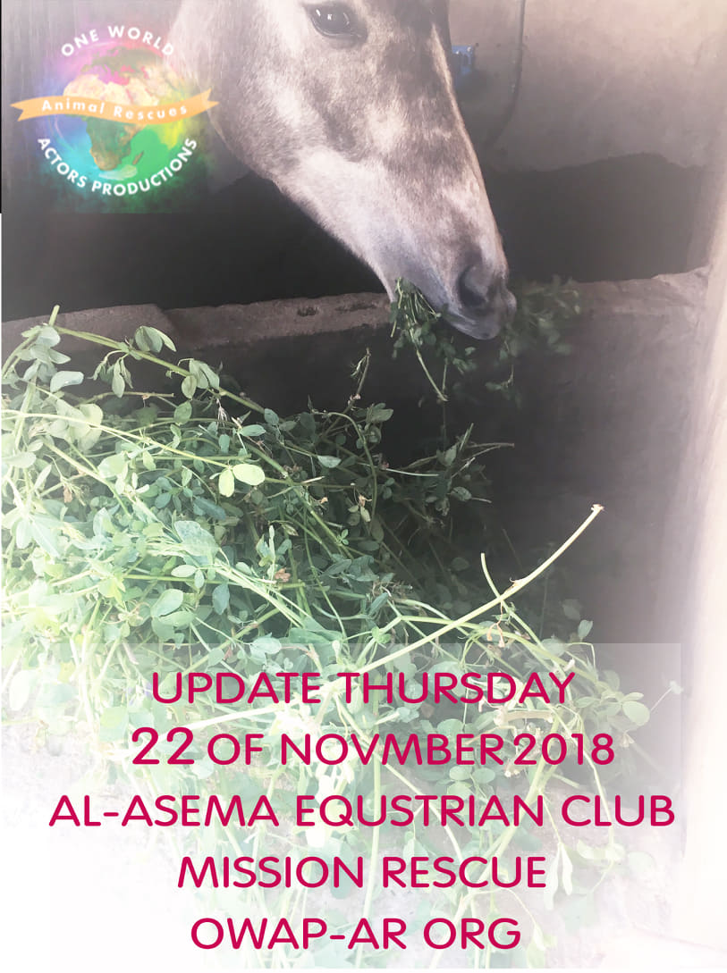 riding club the horses were very very very hungry OWAP-AR 22 NOV 2018.jpg