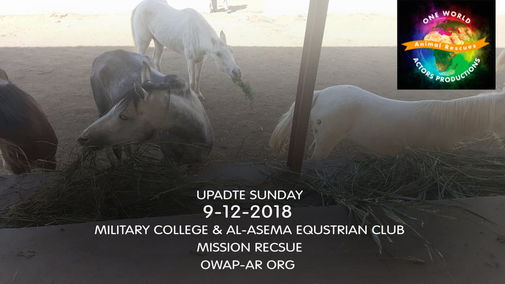 military DEC 9 2018 by OWAP-AR provider nada sana'a yemen rescue.jpg