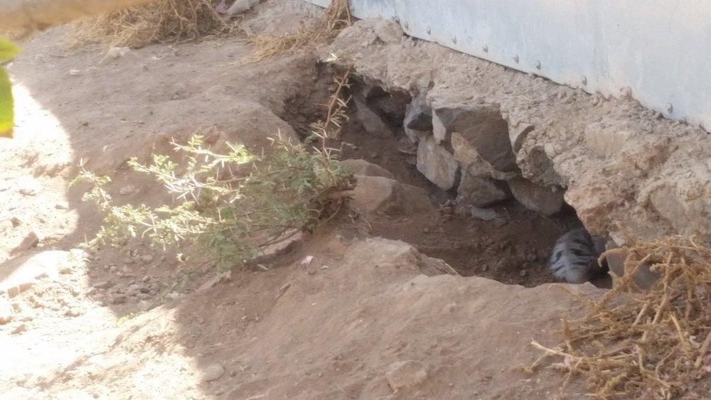 IBB ZOO 11 DEC 2018 new born Striped Hyenas 2 by OWAP-AR Charity yemen zoo rescue.jpg