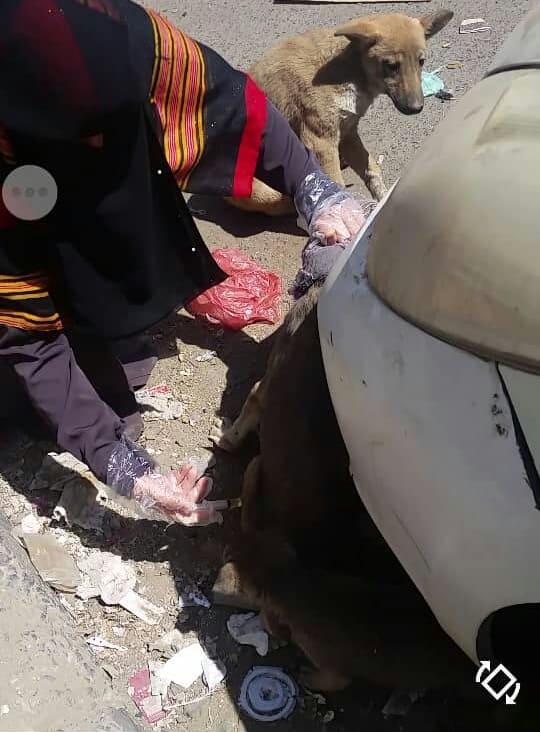 stray rescue 2 dogs injection of 1 Feb 2019 by OWAP-AR sana'a yemen.jpg