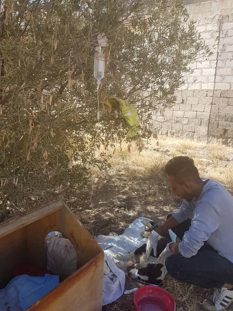stray lucy with vet nabeel alamri 13 Jan 2019 OWAP AR paying.jpg