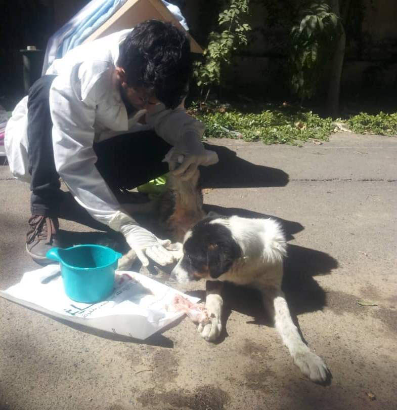 LUCY cleaning her by OWAP-AR vet 4 JAN 2019 sana'a boushra's house.jpg