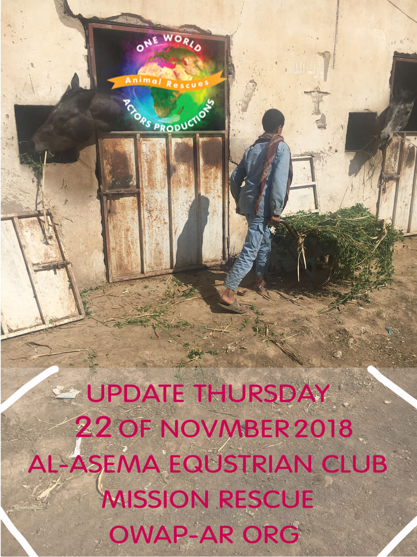 riding equestrian club 22 NOV 2018 delivery and distrib. fodder by nada for OWAP-AR.jpg